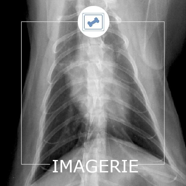 Imagerie Radio Vétérinaire